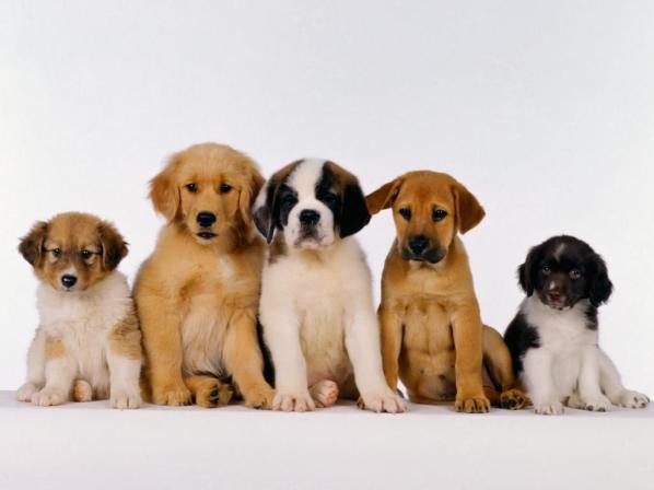 immagine-cani